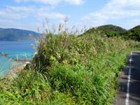 加計呂麻島の芝・実久横断路/絶景ポイント - 芝集落からの最初の急坂を登り切った場所