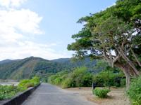 加計呂麻島の於斉集落/於斉のガジュマル - 集落自体はとても小さい