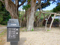 加計呂麻島の於斉集落/於斉のガジュマル - 寅さんのロケ地だったらしいが・・・