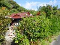 加計呂麻島の徳浜集落/まぶらい・MABURAI/鶴亀 畑cafe/さんご塩工房 - 季節限定カフェもあるらしいが・・・