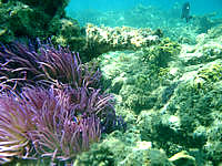 加計呂麻島の芝海岸の海の中 - 魚が少なかったです