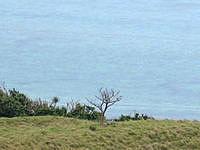 小浜島のちゅらさん和也くんの木 - 何度も植え替えられていますが毎回枯れています