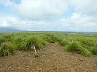 嘉弥真島の嘉弥真島山頂/標高19m - 石垣島や西表島も望めます