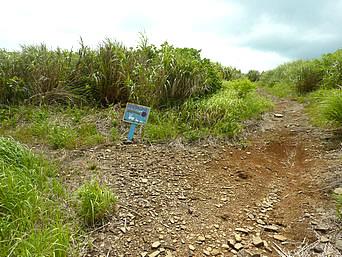 嘉弥真島のウサギさんコース「島の西側を周回する短めのコース」