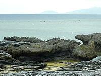 嘉弥真島の北海岸/ノッチ岩 - カモメの住処があって近づくと威嚇される