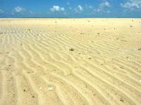 浜島の浜島の砂の大地:大潮 - 風と波の浸食によって波打つ砂の大地