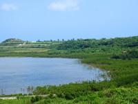 小浜島の石長田海岸/アカヤ崎/ヒルギ林 - ヒルギ林が湾の南側(細崎側)にあります