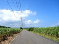 小浜島の第3シュガーロード/小浜ハイウェイ - 本家よりもシュガーロードかも?