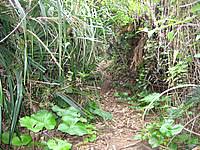 古宇利島の龍之宮 スルル洞 - とにかく道が険しく簡単にたどり着けない