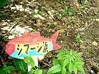 久高島のシマーシ浜 - ここはちょっと岩場が多いかな?