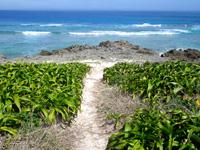 久高島のカベールの植物群落/カベール岬