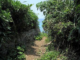 久高島の久高島北側の道「こんな感じで草むらを抜けると「海」という場所が多いです」