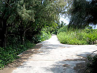 久高島の久高島北側の道 - 道自体は歩くにはちょうど良い感じ