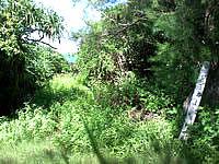 久高島のイザイガー - イザイガーの目印は緑に埋もれています