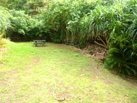 久米島のタチジャミ自然公園/久米島県立自然公園 - この突き当たりの草むら(右)からタチジャミへ