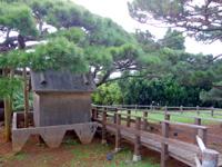 久米島の五枝の松 - 枝振りがとてもきれいです