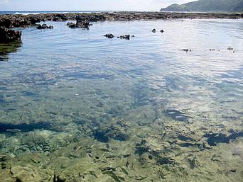久米島の熱帯魚の家「要は潮溜まりの海を言います」