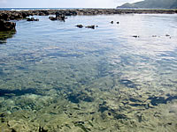 久米島の熱帯魚の家