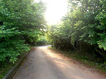 久米島のアーラ林道/阿良林道