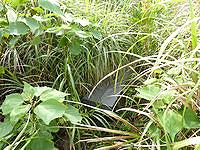 久米島のだるま山 - ベンチはあるもの草ぼうぼう
