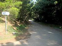 おばけ坂(沖縄本島離島/久米島のおすすめ観光スポット)