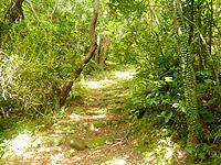 久米島の塩原城跡 - 最初は遊歩道的だが・・・