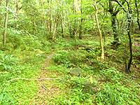久米島のだるま公園登山道