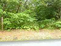 久米島のだるま公園登山道 - こんな所に出ます