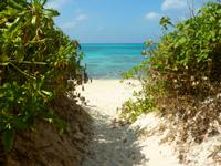 来間島の長間浜 - 林を抜けた先がビーチです