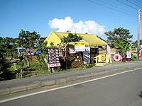 来間島の黄色いテントのてんとむし(宮古島へ移転)
