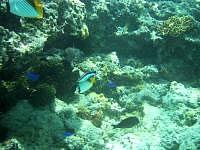 来間島の長間浜海中 - 魚の種類もとても多い
