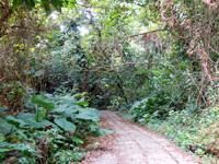 来間島のタコ公園 - 公園と言うよりジャングルのような遊歩道
