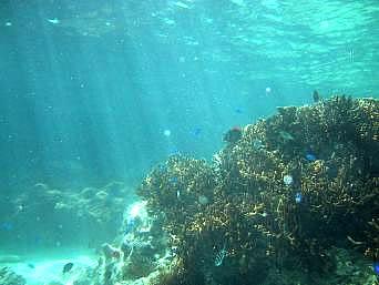 来間島のタコ公園海中「干満にもよりますがかなり浅い」