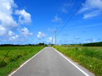 黒島の黒島灯台への道 - 素朴な道でしたがすっかり舗装されてしまいました