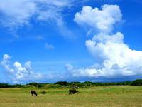 黒島の黒島灯台への道 - のどかな光景が望めます