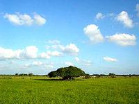 黒島の草原