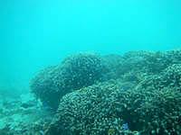黒島の仲本海岸のインリーフ - 深さがそこそこあるので楽しめます