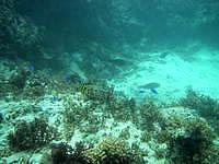 黒島の仲本海岸のインリーフ - 小魚が多く見られます
