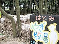 黒島のはとみ やぎ牧場(閉鎖)
