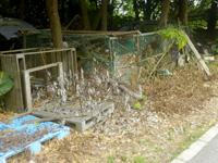 黒島のはとみ やぎ牧場(閉鎖)の写真