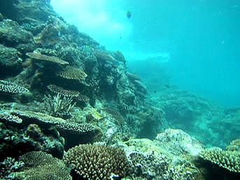 黒島の仲本海岸のアウトリーフ「めちゃくちゃ素潜りには楽しい海です」