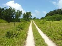 黒島の西の道