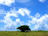 黒島の黒島絶景ロード/メインストリート - 1本木が良い感じ