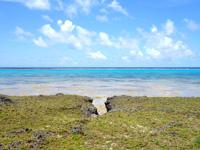 黒島の黒島南端の海 - 岩場の割れ目など面白い部分が満載