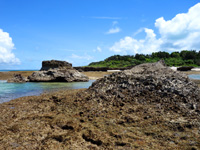 黒島の保慶海岸/ノッチ岩/のこぎり岩 - ノッチ岩は折れてしまいました