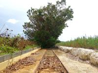 南大東島の旧東レール - 林の中からシュガートレインが出てきそう
