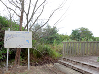 南大東島の大池展望台/東水門 - オヒルギ群落と言われてもヒルギが無い?