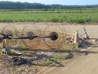南大東島の双子のビロウ - 伐採後の切り株がかすかに残る