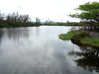 南大東島の瓢箪池/月見池/月見橋 - 月見橋はかなり景色が開けている