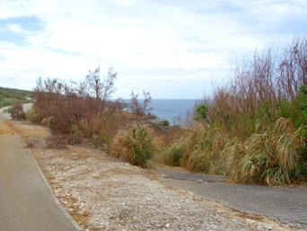 南大東島の山羊道/ヤギ道「何気ない道です」